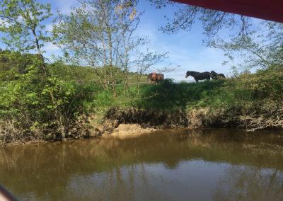 chevaux-bord-eau-bateau-échappée-fluviale