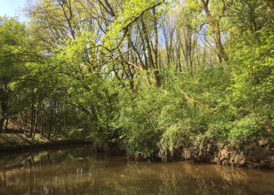 forêt-eau-balade-bateau-échappée-fluviale
