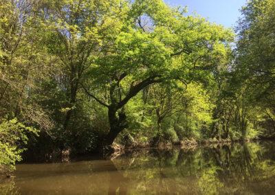 forêt-eau-balade-bateau